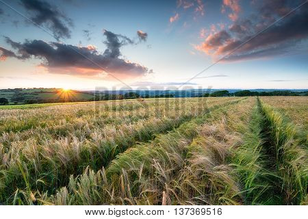 Beautiful Sunset Over Farmland