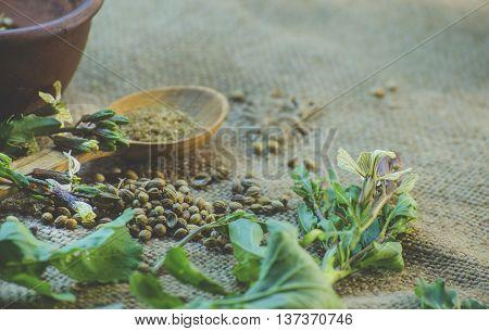 coriander - fresh leaves seeds and ground coriander
