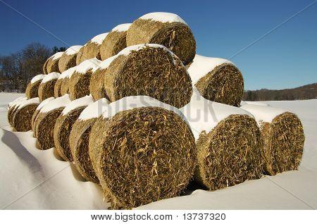Corn Fodder Bales in Winter