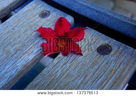 A bright, red flower is displayed on a wooden and metal bench in the garden.
