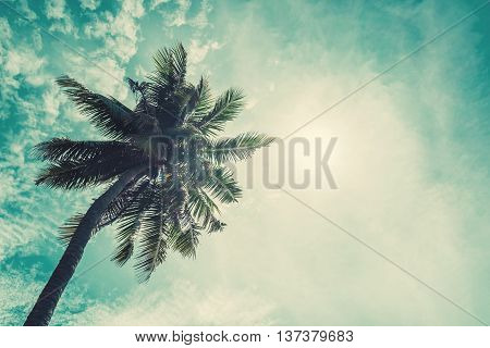 Coconuts palm with sunshine on the sky and sunlight effects, vintage tone soft focus