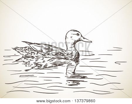 Sketch of duck in water, Hand drawn vector illustration