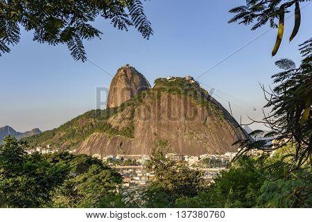 Sugar Loaf and Urca between the vegetation of Rio de Janeiro