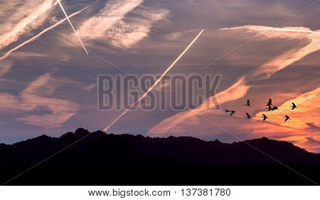 Sunrise or sunset with birds silhouette over bright sky background environment or ecology concept
