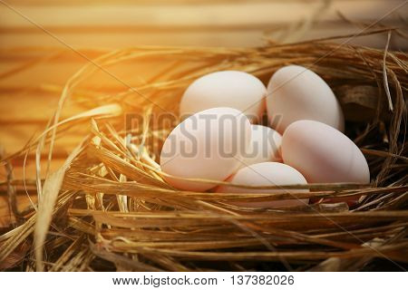 Eggs in nest on the nature or farm, Fresh eggs for cooking and material in Kitchen room, New eggs background for food magazine, Healthy food for old people or Patient which will help to refresh life.