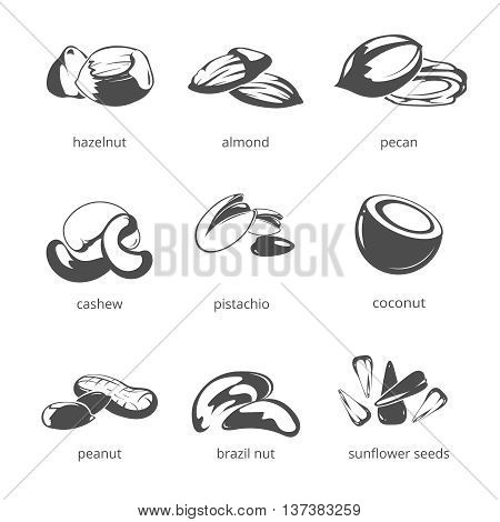 Nuts vector icon set. Natural nuts for health, hazelnut and almond, pecan and cashew nuts illustration