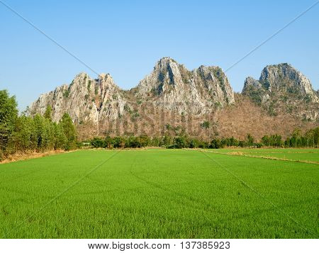 A green paddy field located at the countryside towered by Khao No Khao Kaeo a limestone hill.