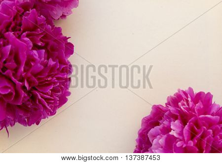 Bouquet of pink peony against the rough wrapping paper. Peonies mockup