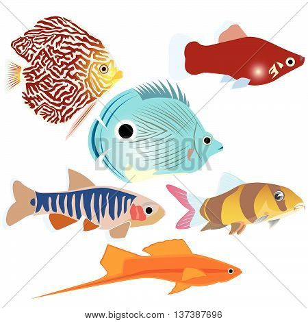 Collection of aquarium fish. The illustration on a white background.