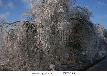 Ice Tree5
