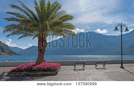 Beautiful Lakeside Promenade With Palm Tree And Flowerbed, Limone Sul Garda