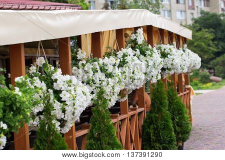 A cafe decorated by ornamental flowerpots of white petunia flowers