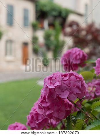 Bouquet Of Colorful Flowers In A Garden Italy