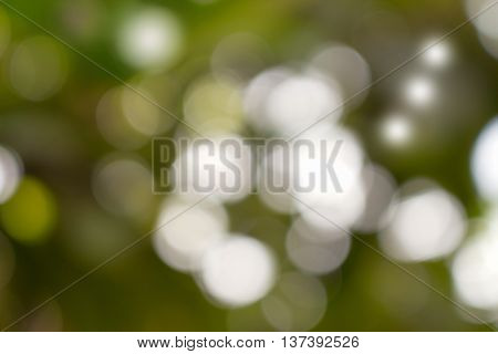 Bokeh natural color background Warm Filter leaf of the tree fresh green abstract blurred and bright summer sunlight with copy space