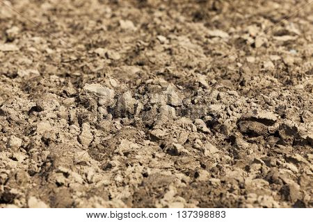 photographed close-up of plowed land, which will grow cereals, wheat and spring seasons