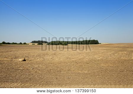 plowed agricultural field after harvest, sky and trees in the background