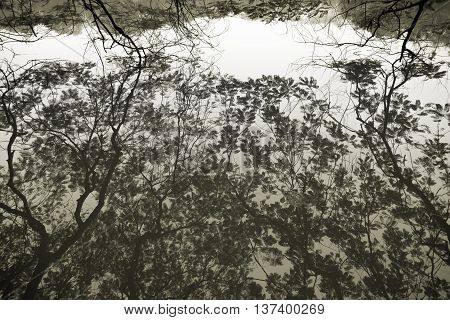 Reflections of tree branches on water at Hoan Kiem Lake Hanoi Vietnam.
