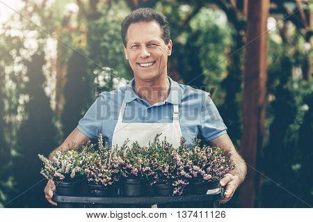 Confident gardener at work. Handsome mature man in apron holding potted plants and smiling while standing in a greenhouse