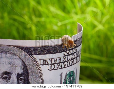 worm bite through hundred dollar bill over green background
