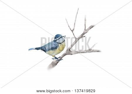 Creative Illustration and Innovative Art: Bird on Branch, Water Color Style. Realistic Fantastic Cartoon Style Artwork Scene, Wallpaper, Story Background, Card Design