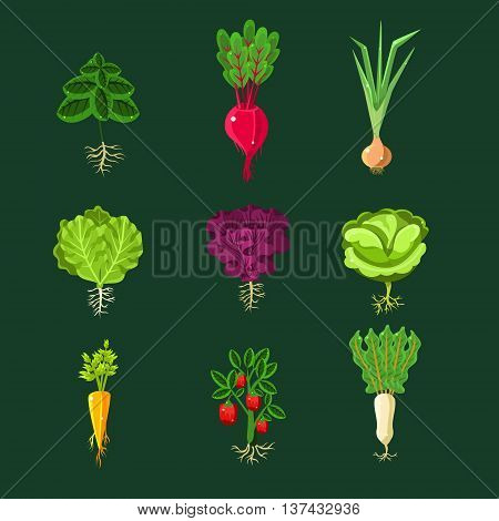 Fresh Vegetable Plants With Roots Set In Realistic Cartoon Cool Flat Vector Design Isolated On Black Background