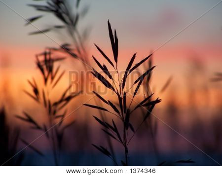 Grass And Sunset