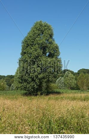 tree in the countryside near Chartres, France