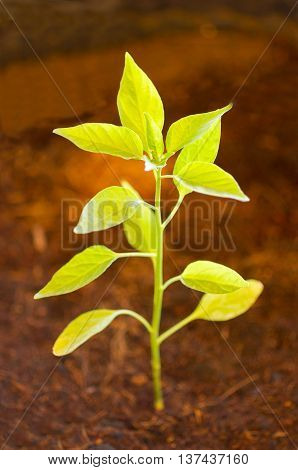 Small plant. growth, green, life, environment, nature.