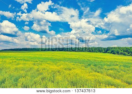Field with flowers at hot day summer time.