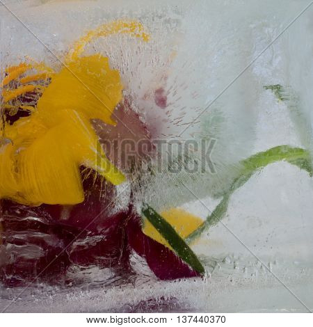 Frozen fresh beautiful flower of lily and air bubbles in the ice cube