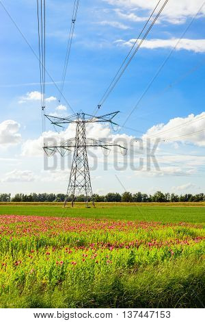 Power lines form an angle at a high pylon in a colorful agricultural Dutch polder landscape with fields full of pink blooming poppies and green silage maize plants.