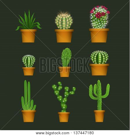 Different cactus types in flower pot realistic isolated plant icons set. Vector illustration