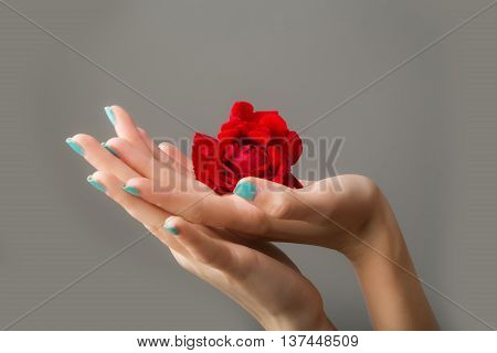 Female Hands With Red Rose