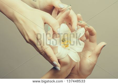 Female Hands With White Lily