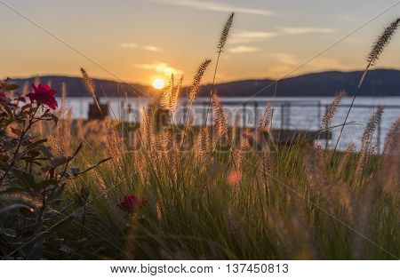 Hudson River landscape seen through a foreground of soft focus grass in a sunset setting.