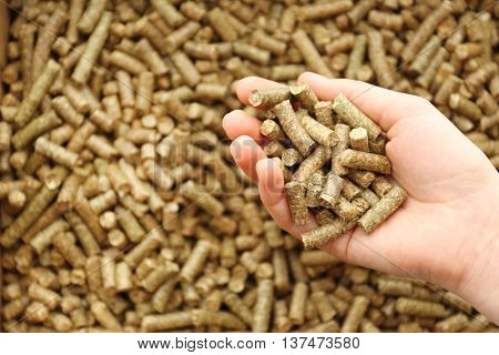 Human hand holding solid wooden pellets, closeup