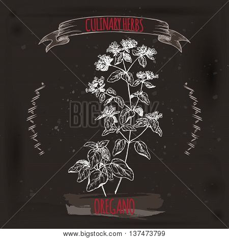 Origanum vulgare aka Oregano vector hand drawn sketch on black grunge background. Culinary herbs collection. Great for cooking, medical, gardening design.