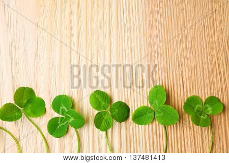 Clover leaves on wooden background