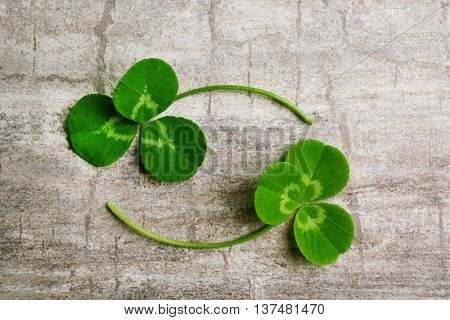 Clover leaves on gray wooden background