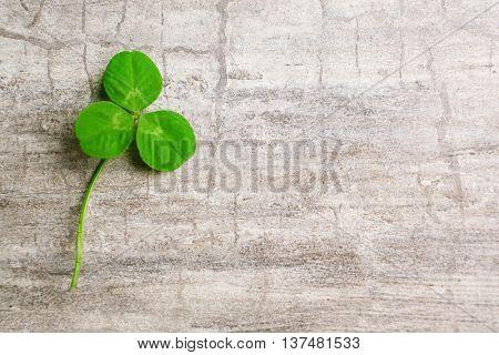 Clover leaf on gray wooden background