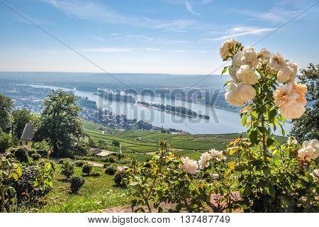 Ruedesheim In The Rheingau