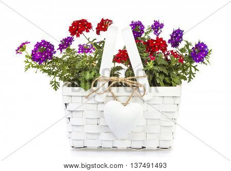 White gift basket with heart-shaped pendant filled with red and purple Vervain flowers isolated on white background
