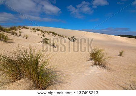 High sand hill ridge from afar at Little Sahara white sand dune system on Kangaroo Island, South Australia