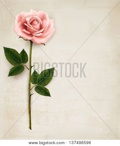 Single pink rose on an old paper background. Vector.