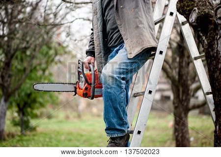 Man Cutting Wood From Trees Climbing A Ladder And Using A Chains