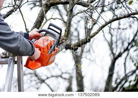 A Lumberjack Worker Cutting Branches From Tree For Fire Wood Wit