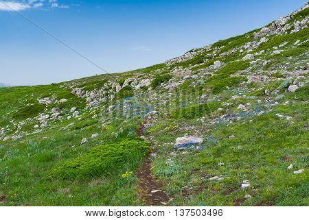Spring landscape with hiking path among wild flowers on a Chatyr-Dah mountainous massif Crimean peninsula