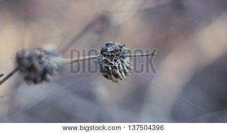 Macro Bokeh Dry Plant Spring Solstice Blurry