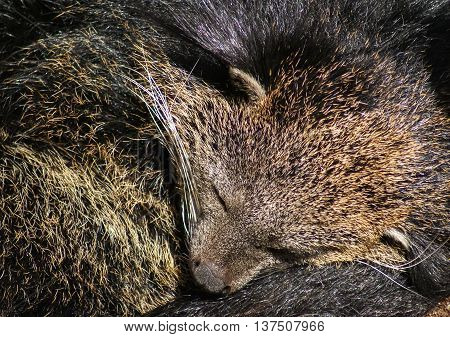 Image of a sleeping bear, Madrid, Spain