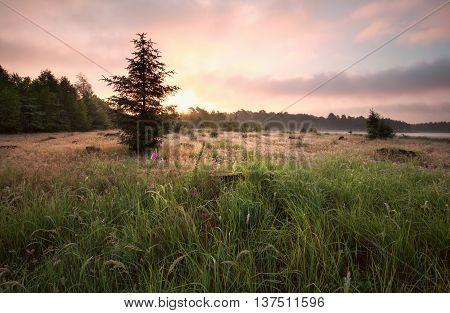 gold sunrise over meadow in summer Drenthe Netherlands